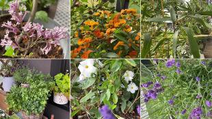 Maja Popielarska i Anna Dec podpowiadają, jakie rośliny wybrać na balkon