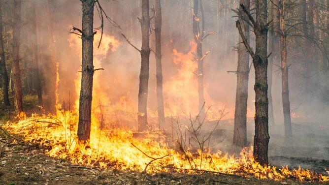"""Blisko cztery tysiące pożarów lasów od początku roku. """"Być może będzie rekordowy"""""""