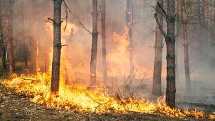 Duże zagrożenie pożarowe w wielu regionach kraju