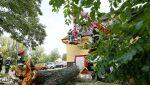 Drzewo zawaliło się na budynek szkolnej bursy (PAP/Tomasz Wojtasik)